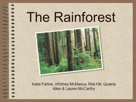 The Rainforest Katie Farlow, Whitney McManus, Rita Hill, Quiana Allen & Lauren McCarthy.