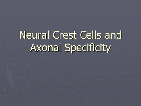 Neural Crest Cells and Axonal Specificity. Neural Crest ► Where is the neural crest located and why is this region so important?