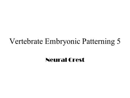 Vertebrate Embryonic Patterning 5 Neural Crest. Neural Crest Cells.