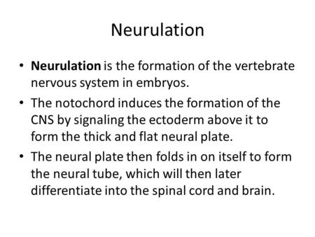 Neurulation Neurulation is the formation of the vertebrate nervous system in embryos. The notochord induces the formation of the CNS by signaling the ectoderm.