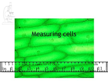 Measuring cells.