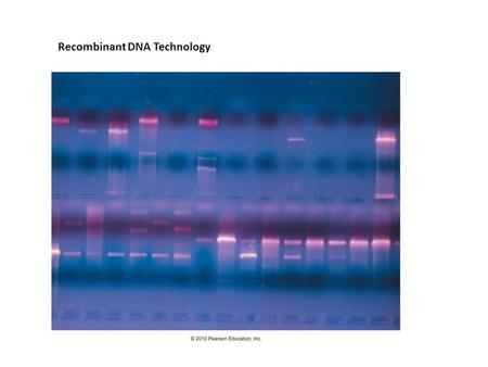 Recombinant DNA Technology. Recombinant DNA Technology combines DNA from different sources – usually different species Utility: this is done to study.