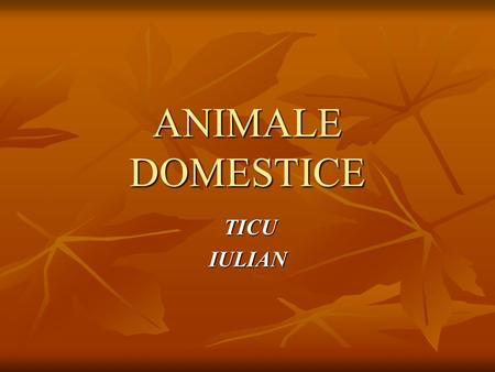 ANIMALE DOMESTICE TICU IULIAN.