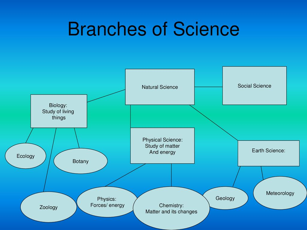 Branches Of Science Social Science Natural Science Biology Ppt Download
