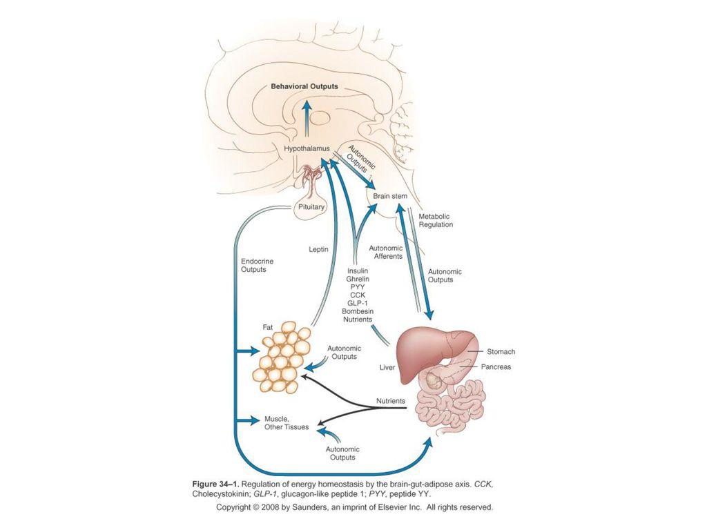 gut axa creierului pierdere în greutate)