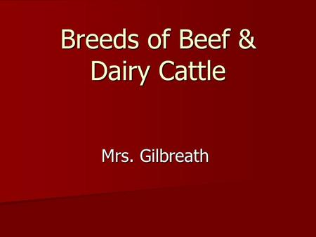 Breeds of Beef & Dairy Cattle Mrs. Gilbreath. Today you will be able to… Identify characteristics of Major Beef Cattle Breeds, Dual-Purpose and Dairy.