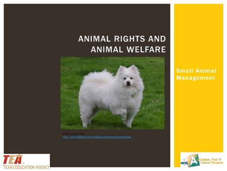 Small Animal Management ANIMAL RIGHTS AND ANIMAL WELFARE Picture taken from: