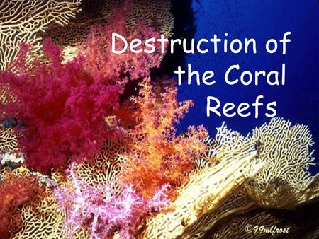Destruction of the Coral Reefs