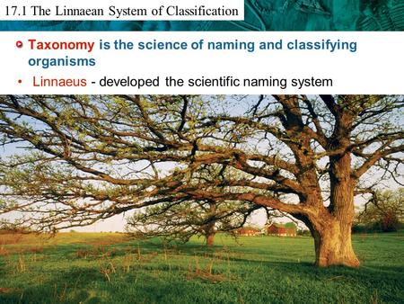 12.6 Primate Evolution Taxonomy is the science of naming and classifying organisms Linnaeus - developed the scientific naming system 17.1 The Linnaean.