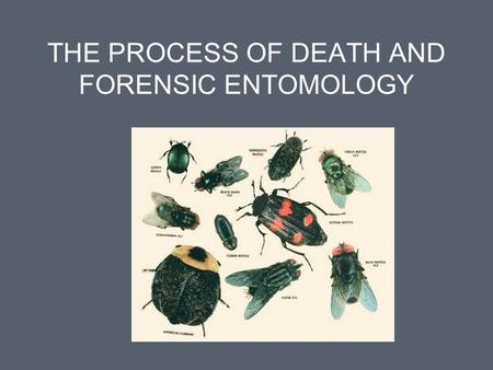 THE PROCESS OF DEATH AND FORENSIC ENTOMOLOGY. The Process of Death Pathologist determines time of death Pretty accurate if body found within first 24.