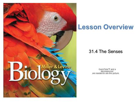 Lesson Overview 31.4 The Senses.