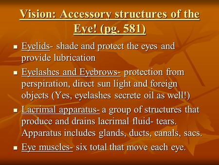 Vision: Accessory structures of the Eye! (pg. 581) Eyelids- shade and protect the eyes and provide lubrication Eyelids- shade and protect the eyes and.