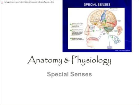 Anatomy & Physiology Special Senses.