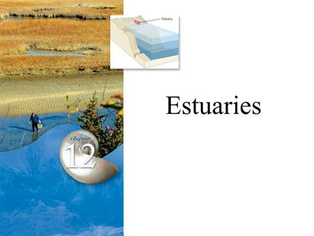 aquatic ecosystems where fresh and salt water meet are called