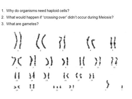 "1.Why do organisms need haploid cells? 2.What would happen if ""crossing over"" didn't occur during Meiosis? 3.What are gametes?"