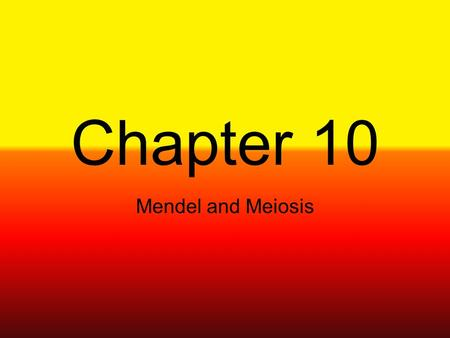 Chapter 10 Mendel and Meiosis.