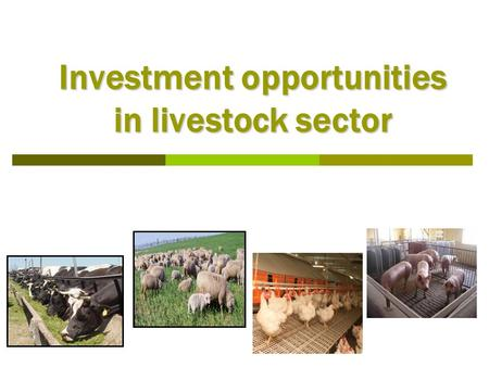 Investment opportunities in livestock sector. TABLE OF CONTENTS  Legal framework  Structure of livestock sector  Favorable regions for animal husbandry.
