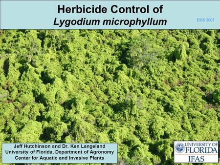 Herbicide Control of Lygodium microphyllum Jeff Hutchinson and Dr. Ken Langeland University of Florida, Department of Agronomy Center for Aquatic and Invasive.