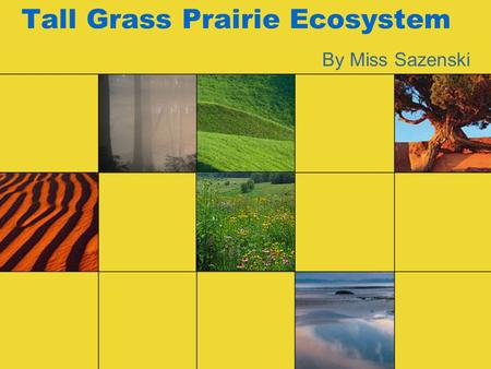 Tall Grass Prairie Ecosystem By Miss Sazenski. Location I am a Tall Grass Prairie. I am found all over the world—on every continent except Antarctica.