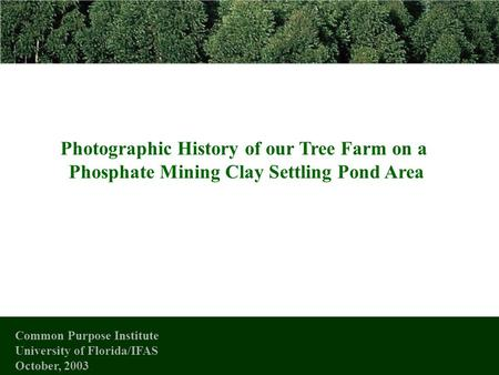 Photographic History of our Tree Farm on a Phosphate Mining Clay Settling Pond Area Common Purpose Institute University of Florida/IFAS October, 2003.