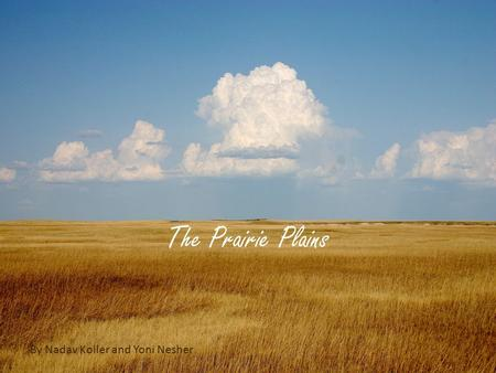 The Prairie Plains By Nadav Koller and Yoni Nesher.