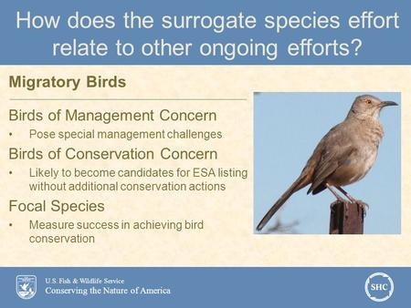 U.S. Fish & Wildlife Service Conserving the Nature of America How does the surrogate species effort relate to other ongoing efforts? Birds of Management.