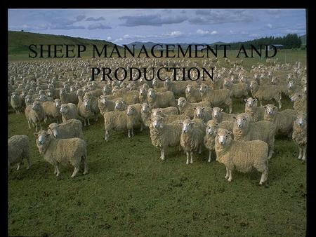 SHEEP MANAGEMENT AND PRODUCTION