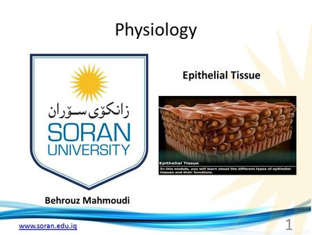 Www.soran.edu.iq Physiology Behrouz Mahmoudi Epithelial Tissue 1.