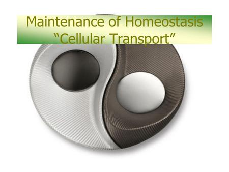 "Maintenance of Homeostasis ""Cellular Transport"". Homeostasis is… A biological balance."
