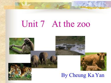 Unit 7 At the zoo By Cheung Ka Yan A tail A monkey has a long tail. a long tail.