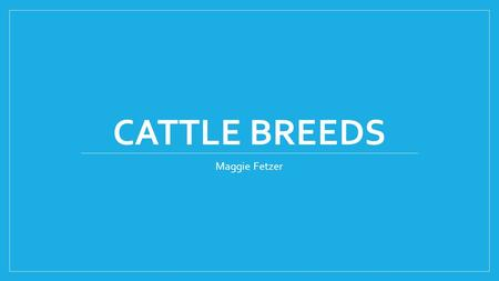 CATTLE BREEDS Maggie Fetzer. Angus- Beef Solid black Lean Slightly muscular Bulls have muscle crest around neck Heifers/ cows very lean Polled (naturally.