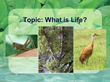 Topic: What is Life?.