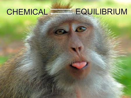 EQUILIBRIUM CHEMICAL. Chemical Equilibrium Reversible Reactions: A chemical reaction in which the products can react to re-form the reactants Chemical.