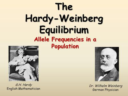 The Hardy-Weinberg Equilibrium Allele Frequencies in a Population G.H. Hardy English Mathematician Dr. Wilhelm Weinberg German Physician.