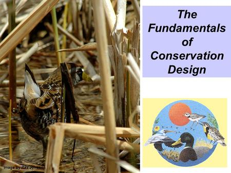 The Fundamentals of Conservation Design Image by Rex Johnson.