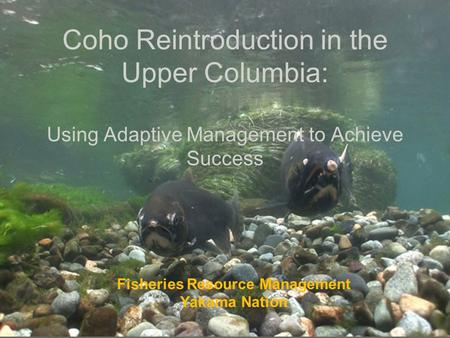 Coho Reintroduction in the Upper Columbia: Using Adaptive Management to Achieve Success Fisheries Resource Management Yakama Nation.