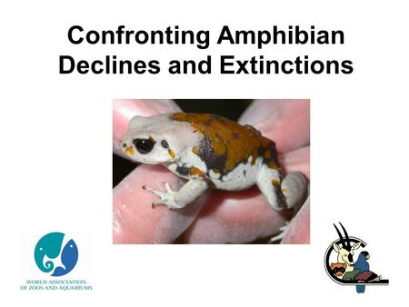 Confronting Amphibian Declines and Extinctions. What is an amphibian? Frogs & toads Newts & salamanders Caecilians.