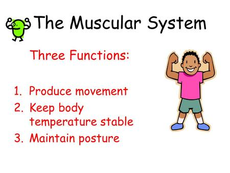 The Muscular System Three Functions: Produce movement