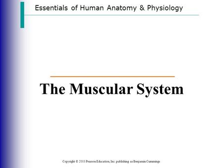 The Muscular System Essentials of Human Anatomy & Physiology