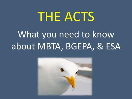 THE ACTS What you need to know about MBTA, BGEPA, & ESA.