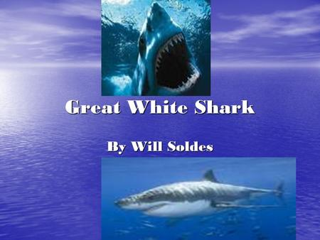 Great White Shark By Will Soldes. Introduction What's great, white, and eats every thing in sight? The great white shark! You'll learn about sharks adaptations,