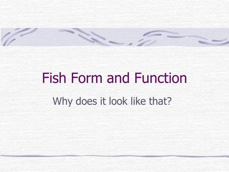 Fish Form and Function Why does it look like that?