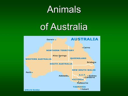 Animals of Australia. The koala The koala, herbivore marsupial, is the mammal the most important of Austalia with the kangaroo. It's a species which drink.