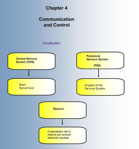 Chapter 4 Communication and Control Vocabulary Central Nervous System (CNS) Brain Spinal Cord Peripheral Nervous System ( PNS) All parts of the Nervous.