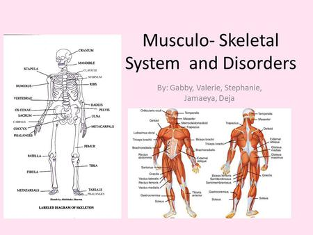 Musculo- Skeletal System and Disorders By: Gabby, Valerie, Stephanie, Jamaeya, Deja.
