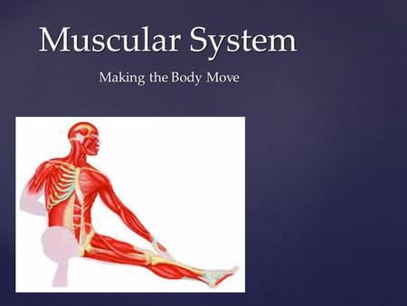 { Muscular System Making the Body Move.  Voluntary – you can control  Involuntary – work independently Muscles are Smart.