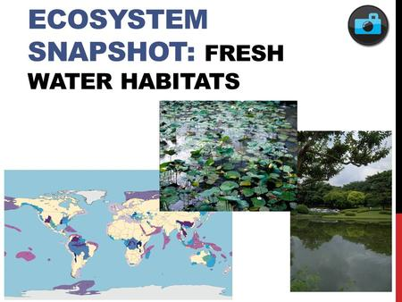 ECOSYSTEM SNAPSHOT: FRESH WATER HABITATS. FEATURED POPULATION: AMERICAN TOAD.