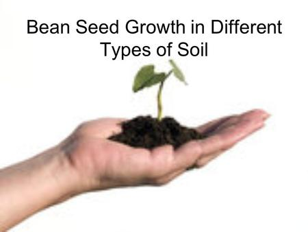 Bean Seed Growth in Different Types of Soil. Big Question Do seeds grow better in potting soil, coffee grounds, sand, or cow manure?