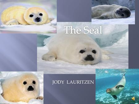 JODY LAURITZEN They are:  Mammals  Reptiles  fish  Birds  Amphibians.