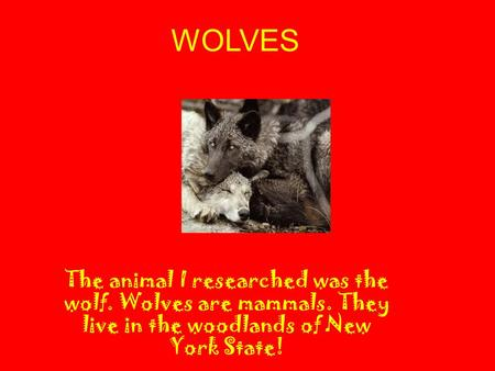 WOLVES The animal I researched was the wolf. Wolves are mammals. They live in the woodlands of New York State!